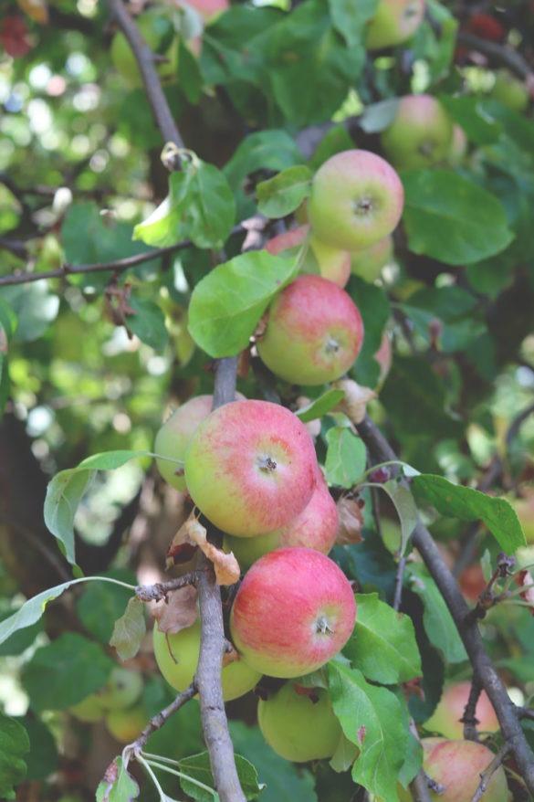 Einfaches Rezept für Apfelkuchen mit Streuseln und Schmand